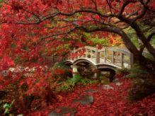 japanese_garden_royal_roads_university_british_columbia