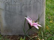 Flower Grave